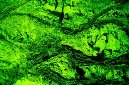 Gerry Atkinson - Alien Nation
