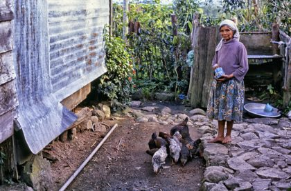 Feeding the hens, Philippines - Gerry Atkinson