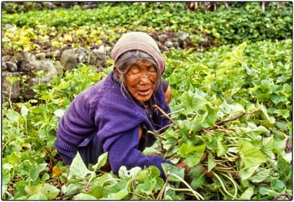 Blind woman picking camote, Philippines - Gerry Atkinson