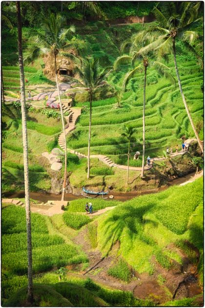 Tegalalang Rice Terrace - Gerry Atkinson