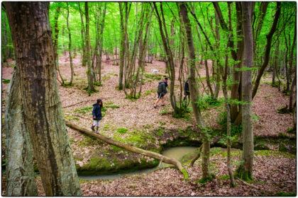 Woods near Dargate -  Gerry Atkinson