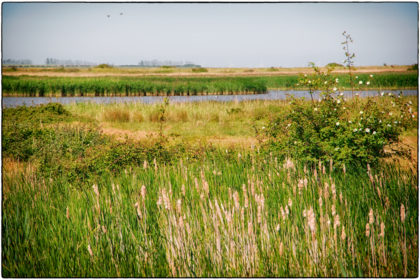 Oare Marshes Nature Reserve -  Gerry Atkinson