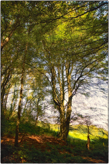 Circular walk from the Bowl Inn, Charing -  Gerry Atkinson
