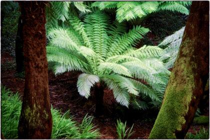 Trewidden Garden-Gerry Atkinson