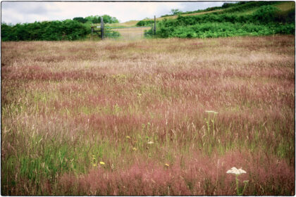 Colourful Field - Gerry Atkinson