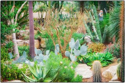Kew Royal Botanic Gardens-  Gerry Atkinson